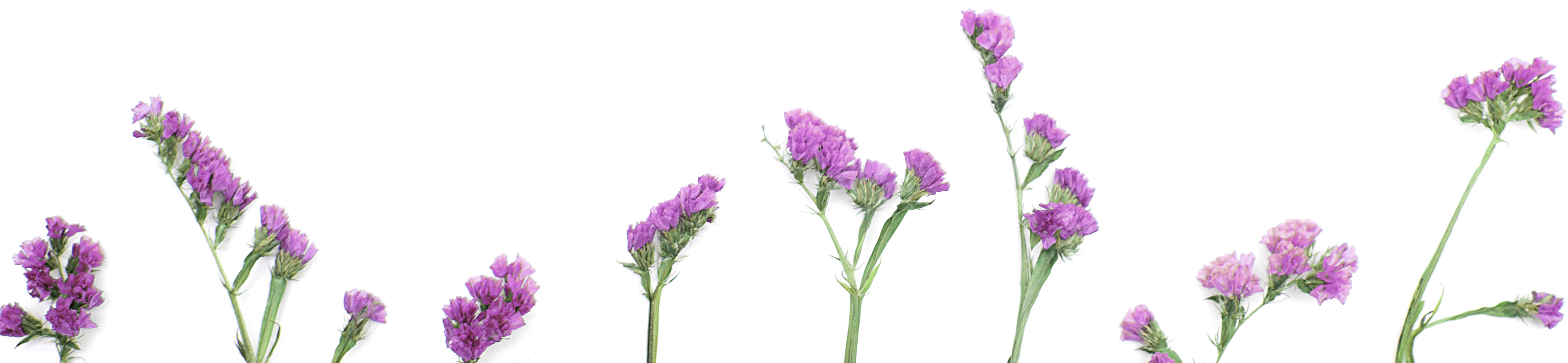 bottom-row-purple-flowers